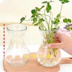 bình hoa thủy tinh kiểu loe tròn đẹp, bình hoa để bàn